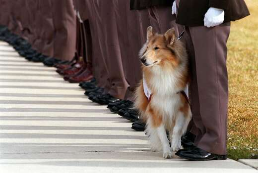 Reveille IV, the Texas A&M mascot, stands with members of the Texas A&M Corp of Cadets following funeral services for Bryan McClain at the Alamo Heights United Methodist Church in San Antonio on Nov. 22, 1999. McClain died as a result of the collapse of the school's bonfire while under construction. Photo: ROBERT MCLEROY, AP / EXPRESS-NEWS