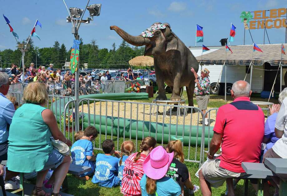 Bill Morris of Tampa, Florida and his Asian elephant Cora perform at the Schaghticoke Fair Friday Aug. 30, 2013, in Schaghticoke, NY.  (John Carl D'Annibale / Times Union) Photo: John Carl D'Annibale / 00023179A