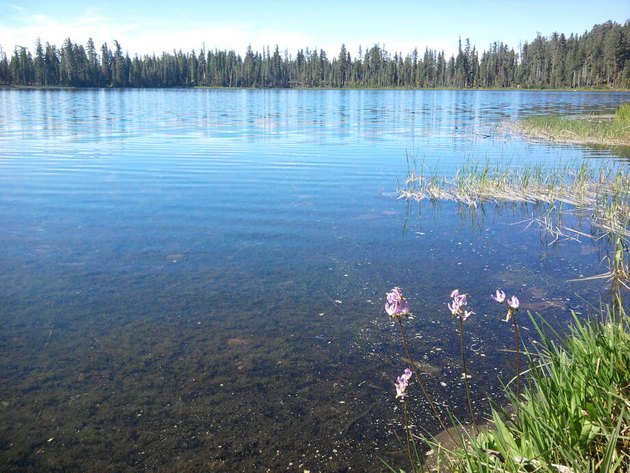 Laurel Lake at 6,490 feet is ringed by forest and peppered with starflowers -- Laurel Lake is next spot in fire's path if it continues north in Yosemite Photo: Tom Stienstra/The Chronicle