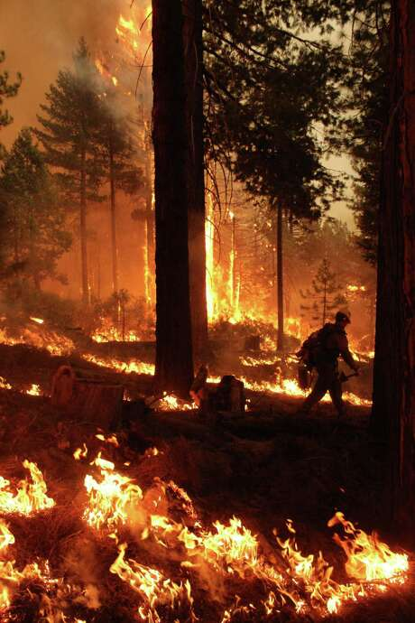 A member of the BLM Silver State Hotshot crew patrols the fire line on the southern flank of the Rim Fire in California. The blaze had scorched 343 square miles of brush, oaks and pines and 11 homes as of Saturday. The dense forest, which hasn't burned since 1905, was primed for destruction, experts said. In one two-day period, a 200-foot wall of flames burned almost 90,000 acres. Photo: Mike McMillan, HOPD / USFS