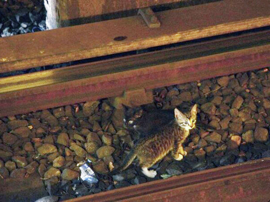 In this Aug. 29, 2013 photo provided by the Metropolitan Transportation Authority in New York, two kittens stand between the rails on subway tracks in the Brooklyn borough of New York. Power was cut to the tracks as transit workers tried to remove the kittens from the tracks but they ran away. Officials say workers and passengers are on the lookout for them and train operators are being asked to proceed with caution. Photo: AP