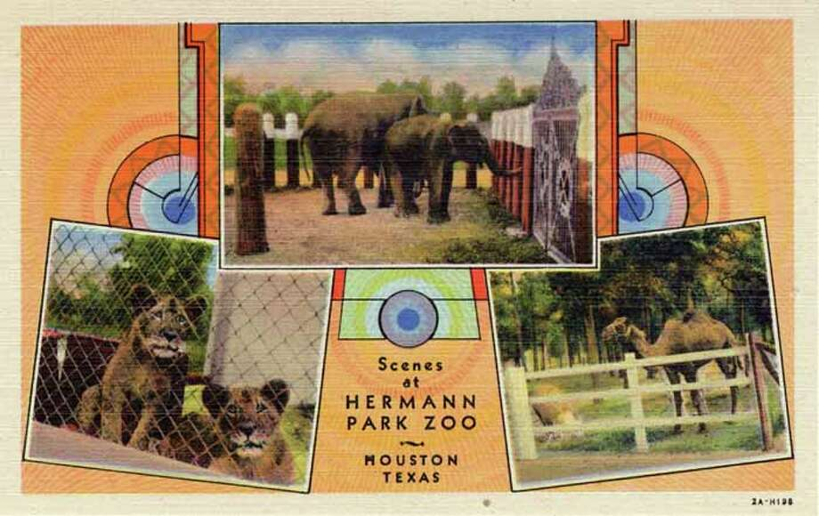 HOUSTON - 1932:  Vintage postcard showing three scenes of animals at Hermann Park Zoo in Houston. (Photo by Lake County Museum/Getty Images) Photo: Curt Teich Postcard Archives, Getty Images / Archive Photos