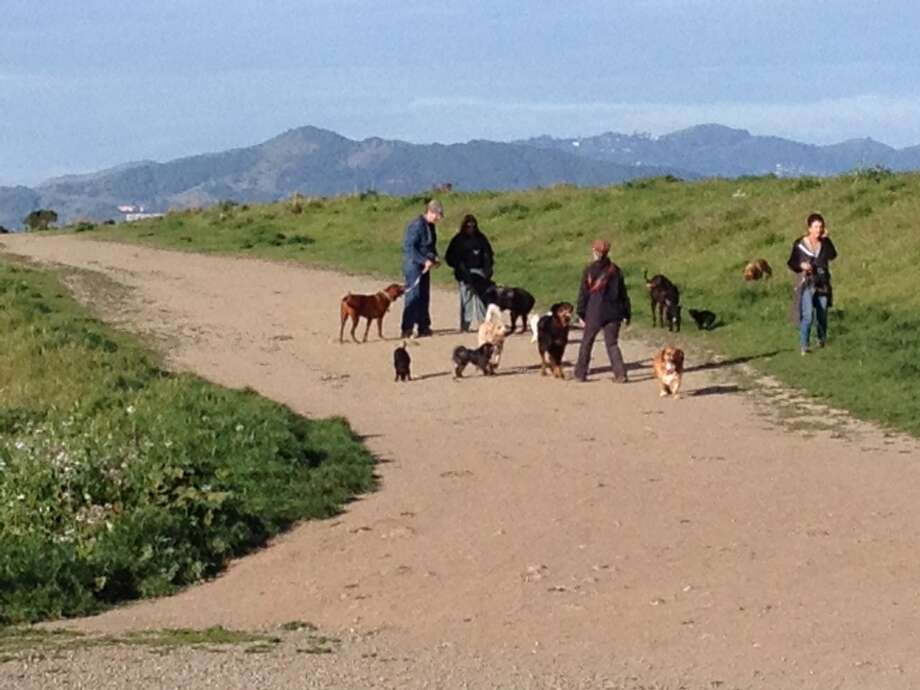 Done shopping? Then, if you have a pooch to run, a stop at the Pt. Isabel dog park is a must. Photo: David Curran