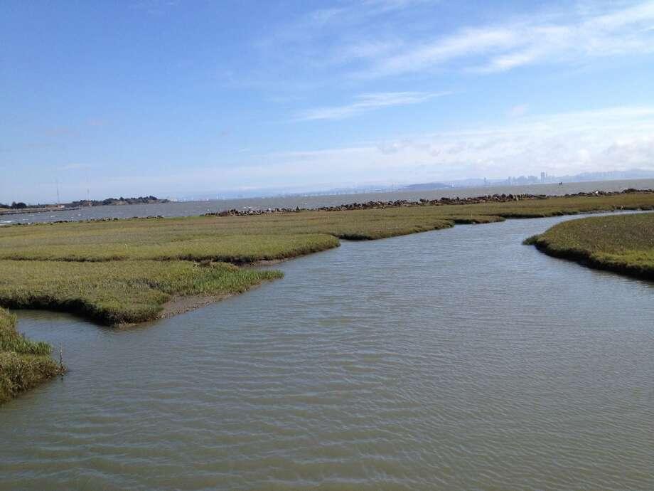 The wetlands along the Bay Trail. Photo: David Curran