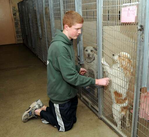 Danbury Area Animal Shelters Low On Money Space Supplies Newstimes