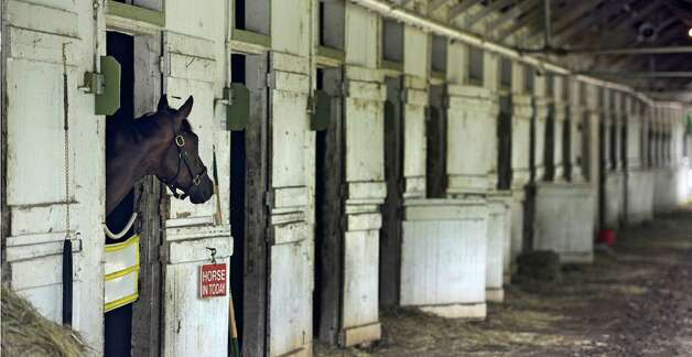 Original Kitten looks for all of her friends who have already shipped from trainer Michael Hushion's barn as she wait to run in the 5th race on as the 150th meeting comes to a close Sept. 2, 2013,  at the Saratoga Race Course in Saratoga Springs, N.Y.  (Skip Dickstein/Times Union) Photo: SKIP DICKSTEIN