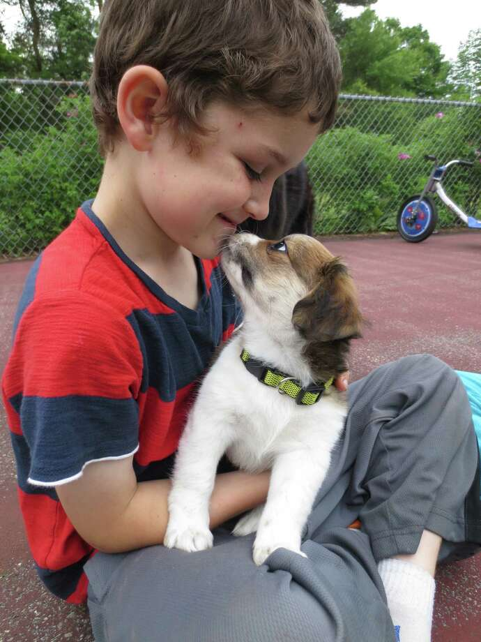 """A beloved aunt delivered the 8-week puppy, Ceci, to our family on the day of my son Casey's 7th birthday.  Ceci comes to Galway via St. Johnsville. As the picture shows, boy and puppy fell in love with each other immediately.   Although the family already has two (aging) dogs and a cat, both of the kids (particularly Casey) have been asking for a puppy. """" We didn't think we wanted a third dog, but after hearing Ceci's story -- the mother of one of my aunt's co-workers took in a stray, then learned she was pregnant and was now trying to adopt out 7 puppies! -- we agreed to look at her,"""" Nicole Clarke said.  Nicole Clarke"""