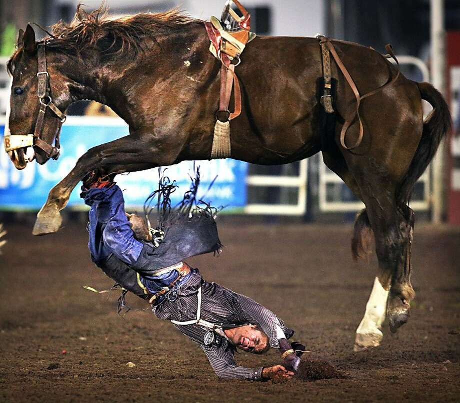 Cowboy Morgan Wilde is thrown to the arena dirt for a no-time in the bareback riding finals of the Walla Walla Fair and Frontier Days PRCA Rodeo, Sunday, Sept. 1, 2013, in Walla Walla, Wash.  Photo: Jeff Horner, Associated Press