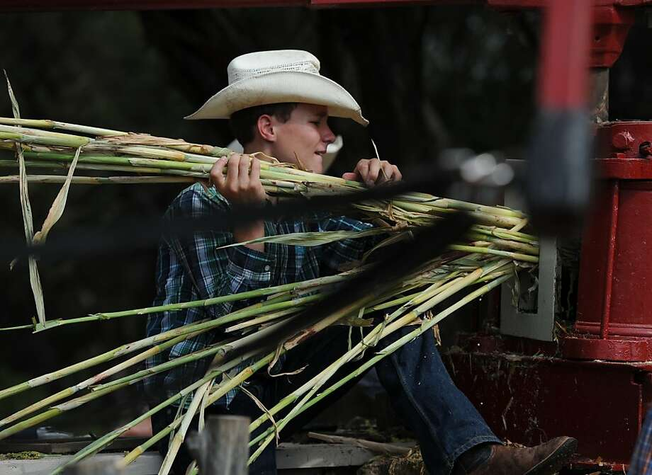Zach Dumont, age 14, loads sorghum stalks into a mule drawn press while making syrup Monday, Sept. 2, 2013 at Brazos de Dios located outside of Waco, Texas. The small community was celebrating its 19th annual Labor Day Sorghum Festival. The juice from the stalks would later be heated and turned into syrup during a 45-minute process.  Photo: Rod Aydelotte, Associated Press