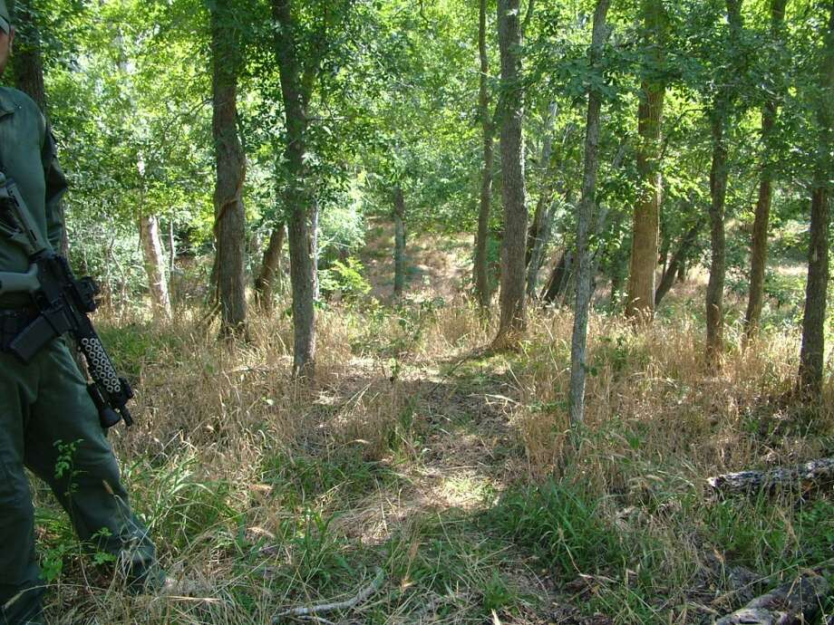 A marijuana growing operation worth $1.5 million was discovered near Sealy Aug. 29 after sources reported it to the Austin County Sheriff's Office.