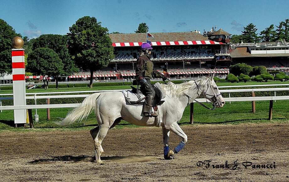 Nice looking white horse on the backstretch. (Frank Panucci) Photo: Picasa