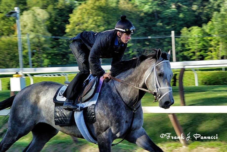 Graydar from the barn of leading trainer Todd Pletcher (Frank Panucci) Photo: Picasa