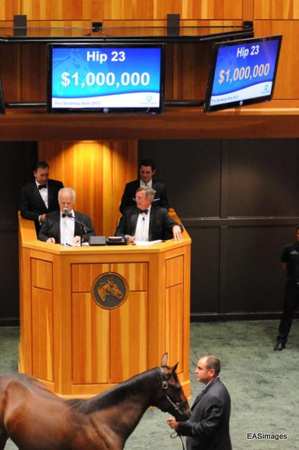 Winner of Monday's Fasig-Tipton Auction. (Ed Sindoni) Photo: Picasa