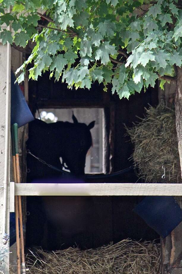 At a stable on the Oklahoma side. Horse silhouette seen through the barn doors. Quiet times for the athlete. Friday, Aug. 2, 2013. (Linda Helfrich)