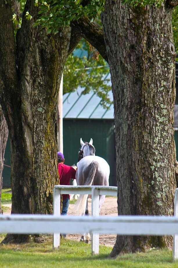 Captured this photo through the gate near the NYRA parking area. Heading back for a well deserved rest. Friday, Aug. 2, 2013. (Linda Helfrich)