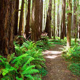 Big trees, Rockport Mendocino County is where Redwood Country begins. Tucked into the Coast Range, the Redwood Grove & Picnic Area is a misty little grove you'll likely have to yourself. Mile marker 88.71, 1/2 mi. north of Rockport. Read more: Must-do road trip: California's 101