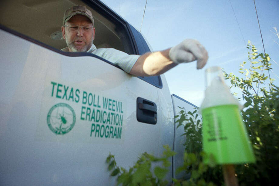 Stephen Daniel with the Texas Boll Weevil Eradication Program checks a trap in Mustang Ridge in Central Texas. The program has cut the pests' numbers throughout Texas, except the Lower Rio Grande Valley, but drought is sending the total there down. Photo: Courtesy Photo