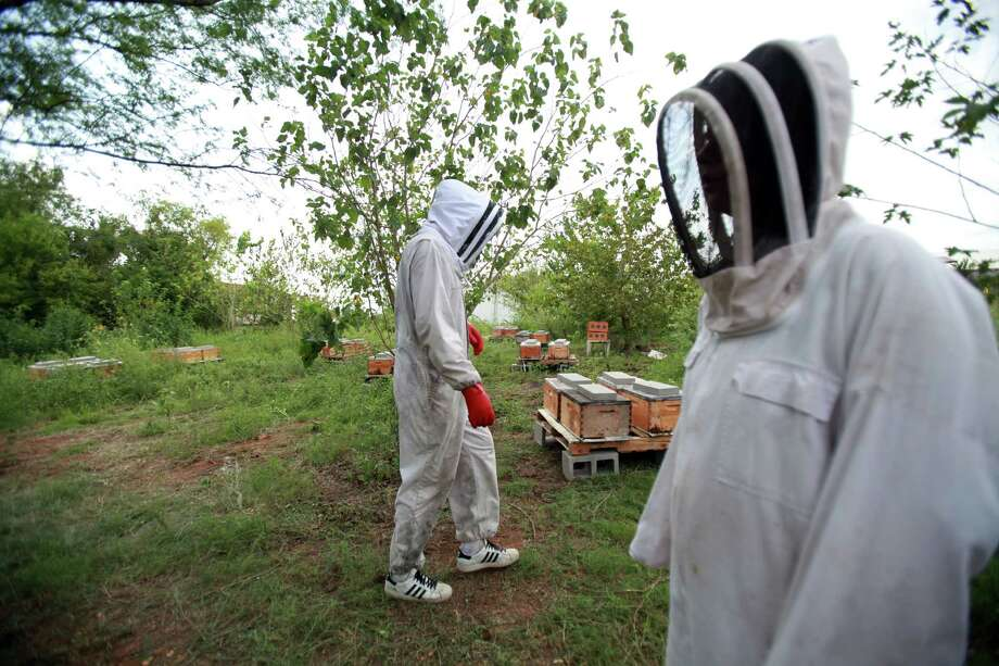 Central Texas Bee Rescue's Seth Cordy and Ashley Gibson will care for the bees that have been relocated into a leased green space in the East End. Photo: Mayra Beltran, Staff / © 2013 Houston Chronicle