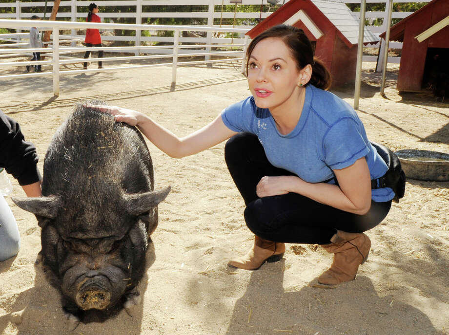 2012: McGowan visits The Gentle Barn in Los Angeles. Photo: Amy Graves, / / 2012 Amy Graves