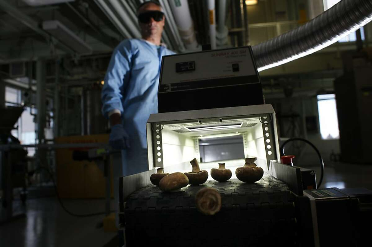 Don Olson, Food Technologist with the United States Department of Agriculture, converts the ergosterol compound in mushrooms, into Vitamin D to get more nutritional value by running through 400 watts of UV synchronized light, Friday August 30, 2013, in Albany, Calif.