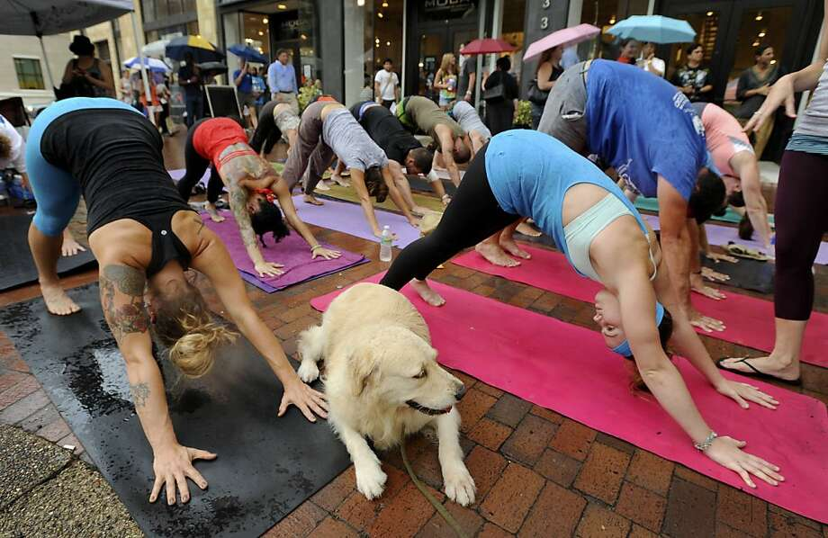 "Raindrops keep falling on my asana: Of those doing the Downward Facing Dog at a ""guerrilla"" yoga gathering during a wet Jacksonville (Fla.) Art Walk, the one with the worst form is the dog. His name is Maka, and he's being trained as a service dog. Photo: Bob Self, Associated Press"