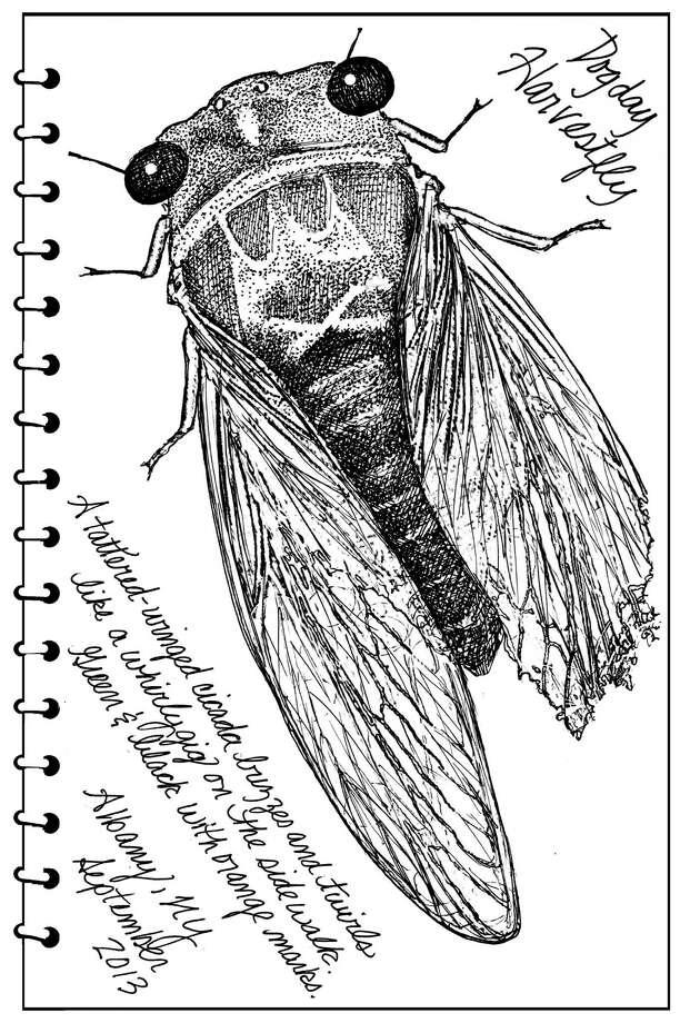 Cicada/Carol Coogan