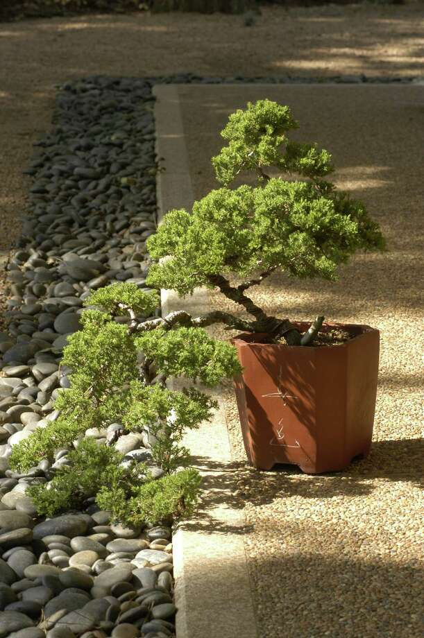 Bonsai will be Saturday's topic at Maas Nursery in Seabrook. Photo: E. Joseph Deering, Staff / Houston Chronicle