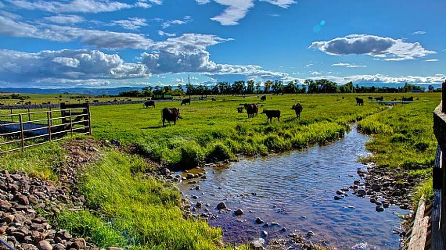 Creek and pasture of Venture Farms, 1850 Venture Road, in Ellensburg. It is scheduled to go up for auction on Sept. 12. Photo: J.P. King Auction Co.