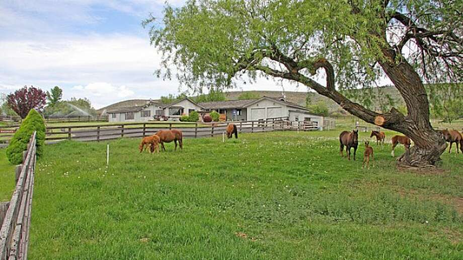 Pasture of Venture Farms, 1850 Venture Road, in Ellensburg. It is scheduled to go up for auction on Sept. 12. Photo: J.P. King Auction Co.