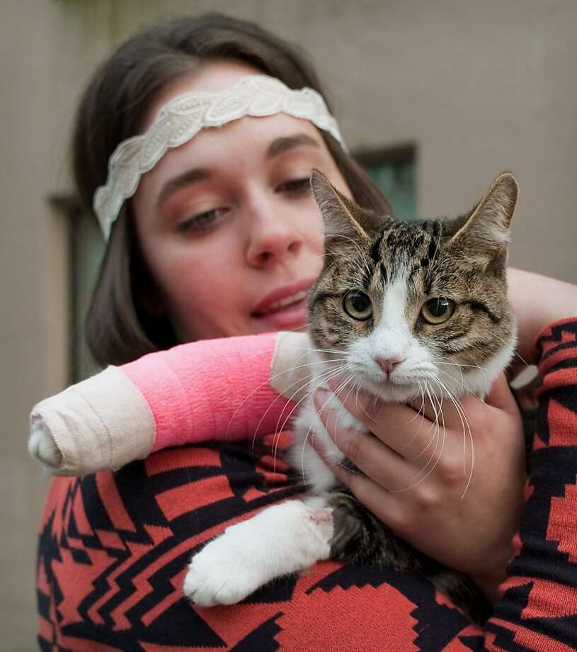 Wasabi might not be the brightest cat - she jumped out of a high-rise window while trying to catch a mosquito - but she sure has a knack for landings. Stephanie Gustafson's 2-year-old  tabby fell 11 stories out of a Juneau apartment building but only suffered broken leg and some lesser fractures. Bet Stephanie keeps the window closed from now on. Photo: Michael Penn, Associated Press