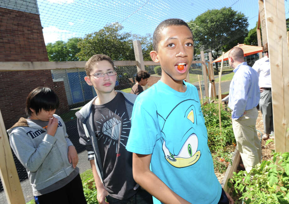 Western Middle School eighth grade student, Olivier Polica, 13, samples a cherry tomato grown at the school's organic garden in Greenwich, Friday, Sept. 6, 2013. Photo: Bob Luckey / Greenwich Time