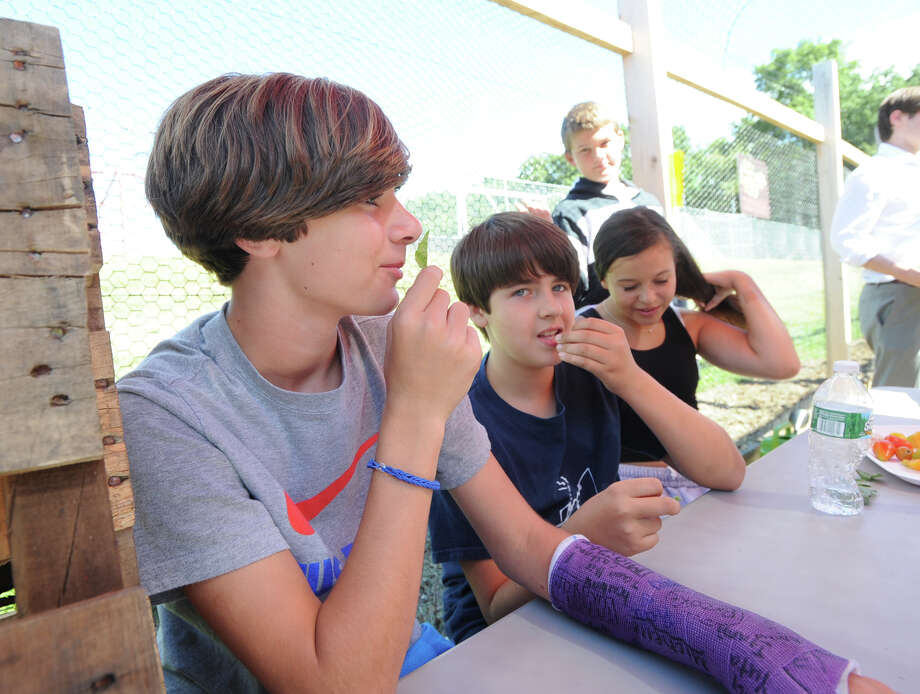 At left, Tyler Yusi, 13, a Western Middle School eighth grade student, smells a basil leaf, along with classmates at the school's organic garden in Greenwich, Friday, Sept. 6, 2013. Photo: Bob Luckey / Greenwich Time