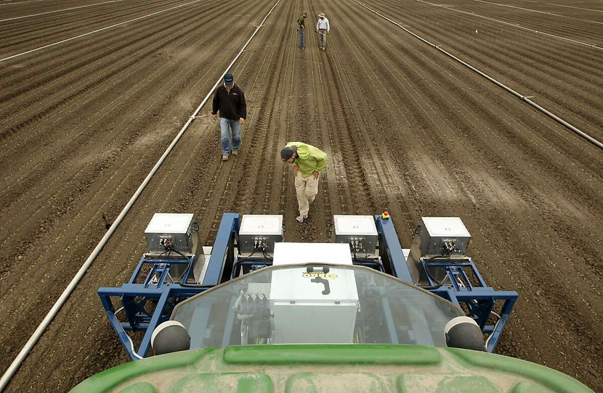 Willy Pell (center) and colleagues inspect the Lettuce Bot's progress as it selectively sprays fertilizer to create space between plants in a Castroville romaine field.