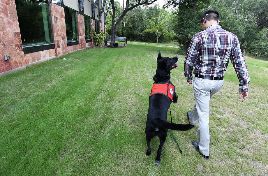Zorro is a service dog for Joshua Calzada who has a hearing impairment. Zorro accompanies Calzada everywhere including his job at an architectural firm. Photo: Kin Man Hui, San Antonio Express-News / ©2013 San Antonio Express-News