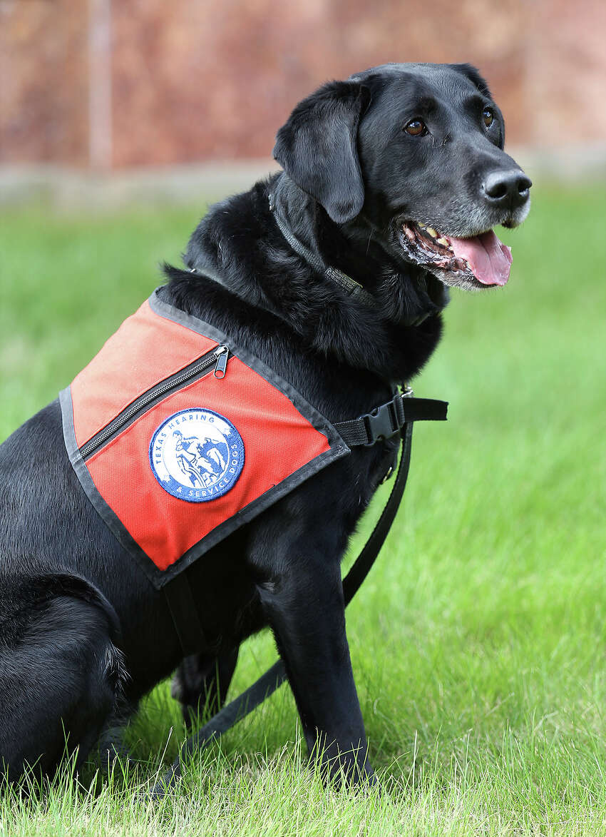 Zorro is a service dog for Joshua Calzada who has a hearing impairment. Zorro accompanies Calzada everywhere including his job at an architectural firm.