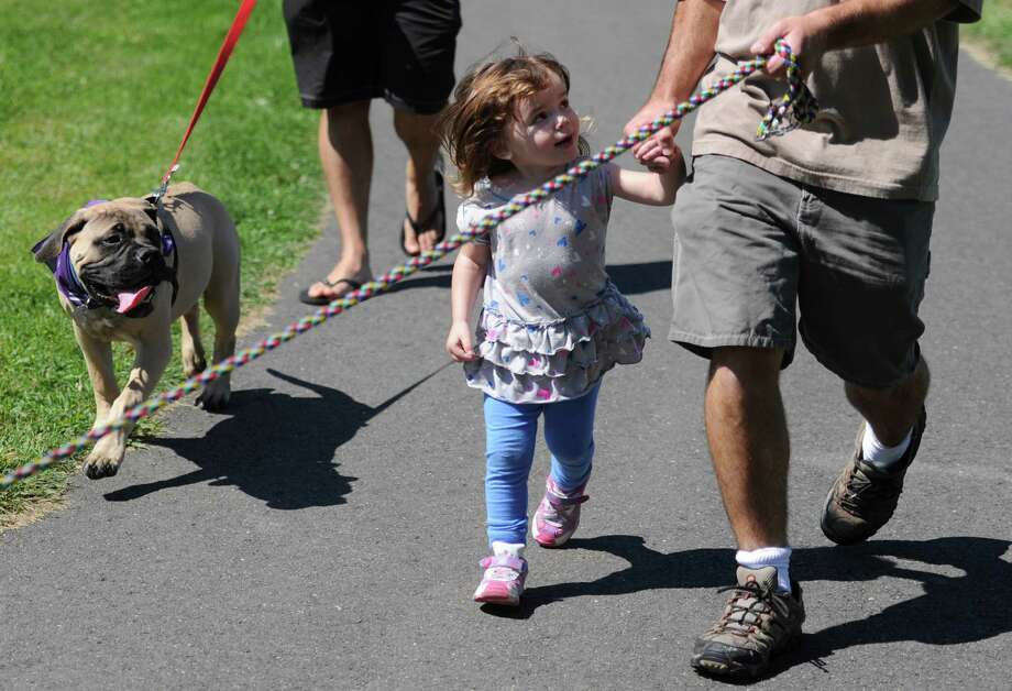 Charlotte Walsh, 2, holds the hand of her father Kyle Walsh, of Danbury, while walking in the American Cancer Society Bark for Life at Meckauer Park in Bethel, Conn. on Saturday, Sept. 7, 2013.  Bark for Life is a half-mile walk for dogs and their owners that raises money for the American Cancer Society and honoring the contributions of the Canine Caregivers.  The event also featured a raffle, food and many contests for the dogs, including best dressed, best tail-wagger and best smile. Photo: Tyler Sizemore / The News-Times