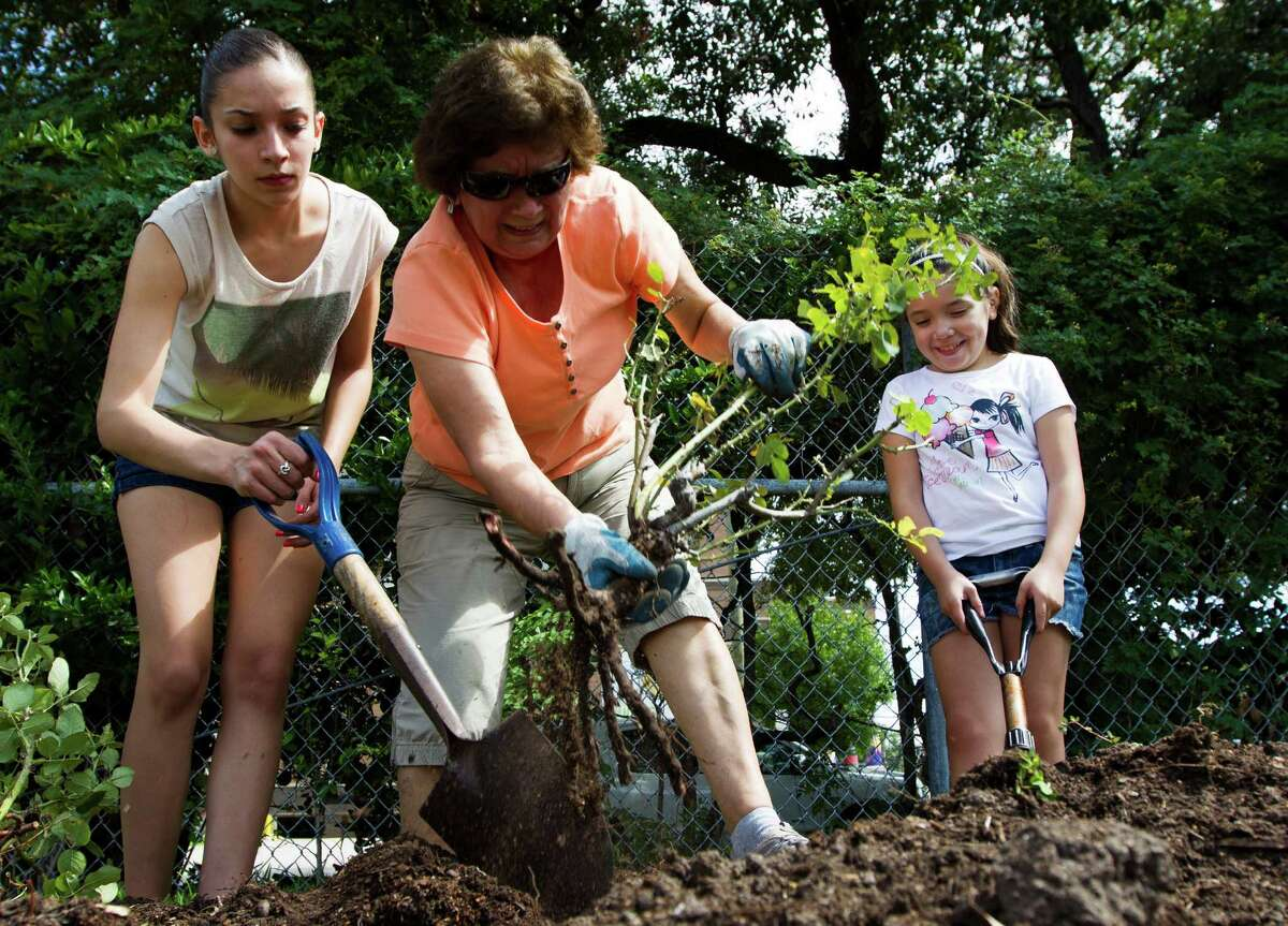 Marisa Rodriguez, 15, and her sister Kathleen Tovar, 8, help their grandmother Olga Ramos dig up a rose bush at the Houston Garden Center on Saturday, Sept. 7, 2013, in Houston.