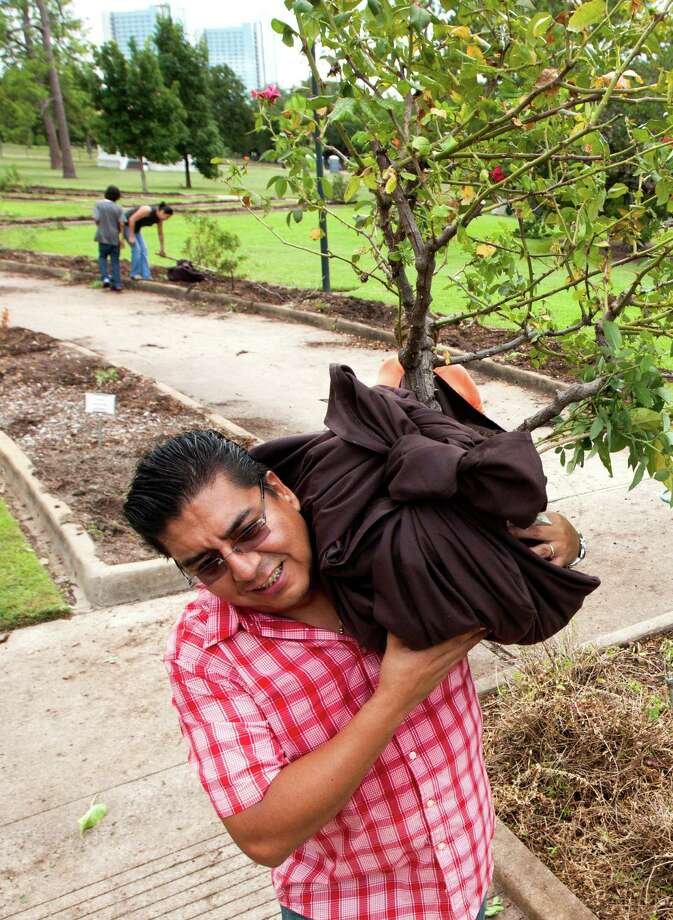 Jesus Lopez carries plants out of the Houston Garden Center on Saturday, Sept. 7, 2013, in Houston. Photo: J. Patric Schneider, For The Chronicle / © 2013 Houston Chronicle
