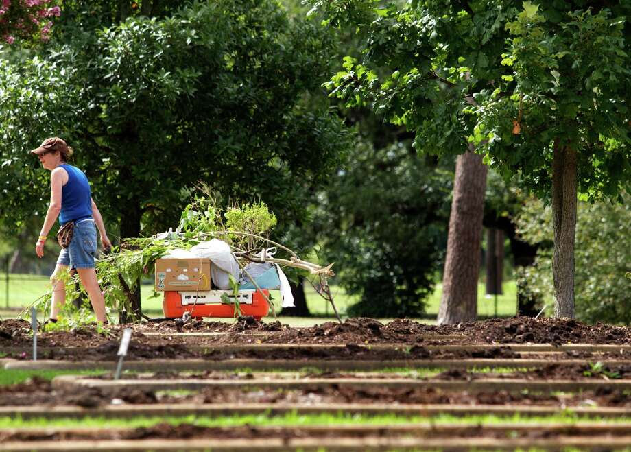 Monica Woolf pulls her wagon while collecting plants at the Houston Garden Center on Saturday, Sept. 7, 2013, in Houston. Photo: J. Patric Schneider, For The Chronicle / © 2013 Houston Chronicle
