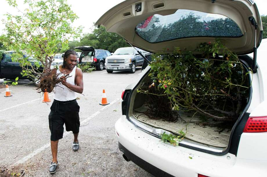 "Avis Bernard places plants inside his Infiniti X35 at the Houston Garden Center on Saturday, Sept. 7, 2013, in Houston. ""It's just a car, that's why they make soap and water,"" Bernard said. Photo: J. Patric Schneider, For The Chronicle / © 2013 Houston Chronicle"