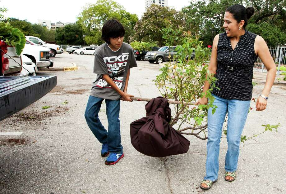 Alicia Lopez and her son Jesse, 13, carry a rose bush out of the Houston Garden Center. Photo: J. Patric Schneider, For The Chronicle / © 2013 Houston Chronicle