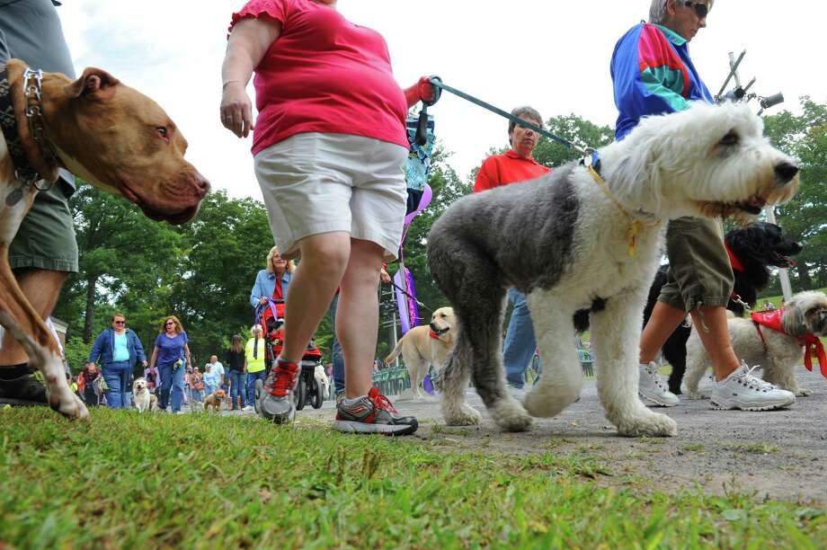 Owners and their dogs take part in the 21st Annual Fireplug 500 Walk for Animals at Central Park on Saturday Sept. 7, 2013 in Schenectady, N.Y. (Michael P. Farrell/Times Union) Photo: Michael P. Farrell / 00023712A