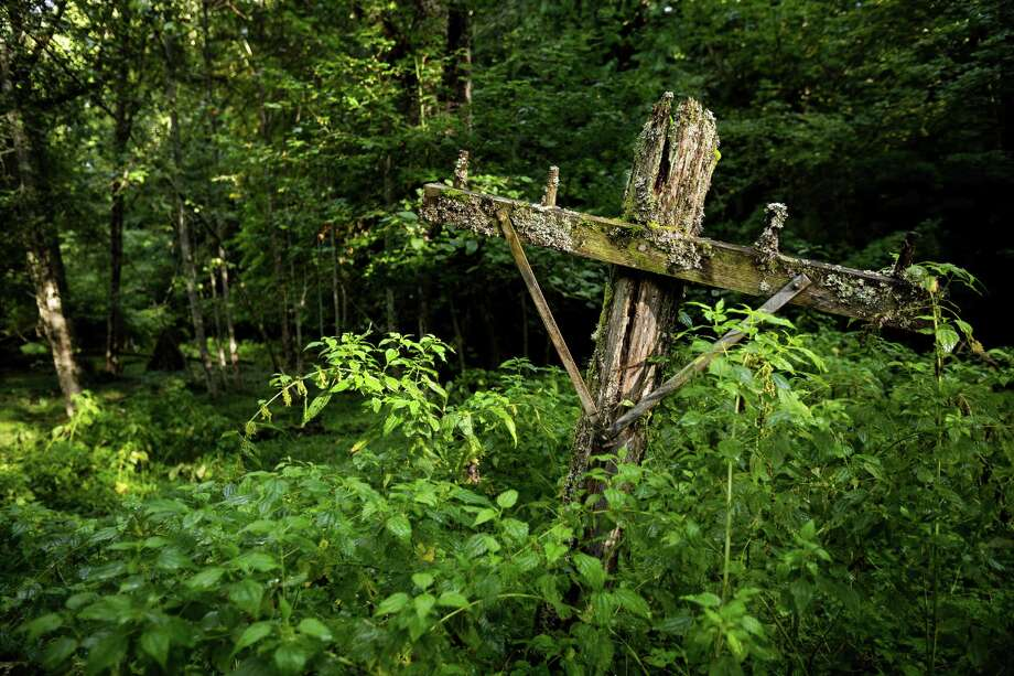 Rotting telegraph poles jut from overgrowth in Washington's ghost town of Lester. Photo: JORDAN STEAD, SEATTLEPI.COM / SEATTLEPI.COM