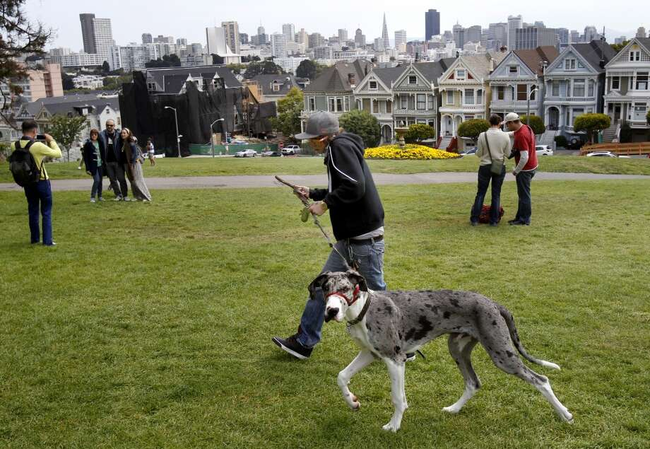 Claim: Dogs outnumber children in San Francisco. Photo: Brant Ward, The Chronicle