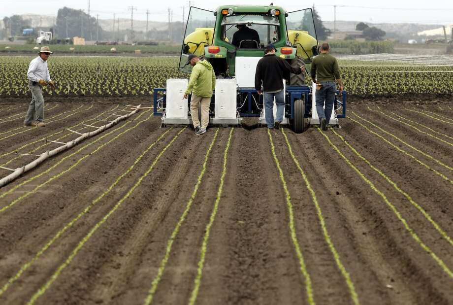 The team keeps a close watch on the operation of the Lettuce Bot machine while working a romaine lettuce field in Castroville. Photo: Michael Macor, San Francisco Chronicle