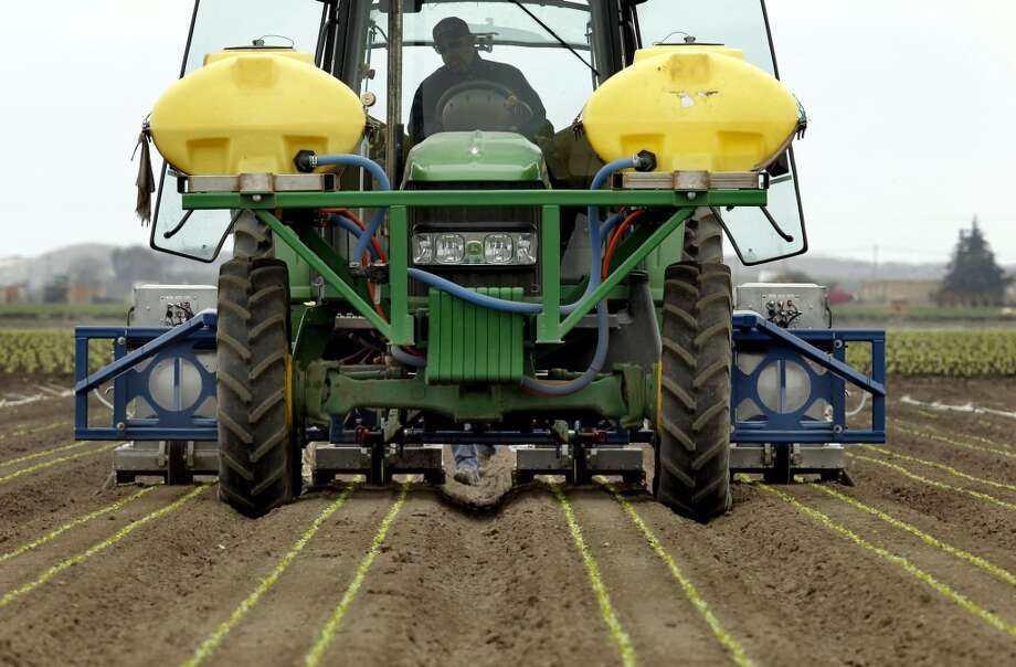 Tractor driver Greg McCready pulls the Lettuce Bot  machine through a romaine lettuce field. Photo: Michael Macor, San Francisco Chronicle