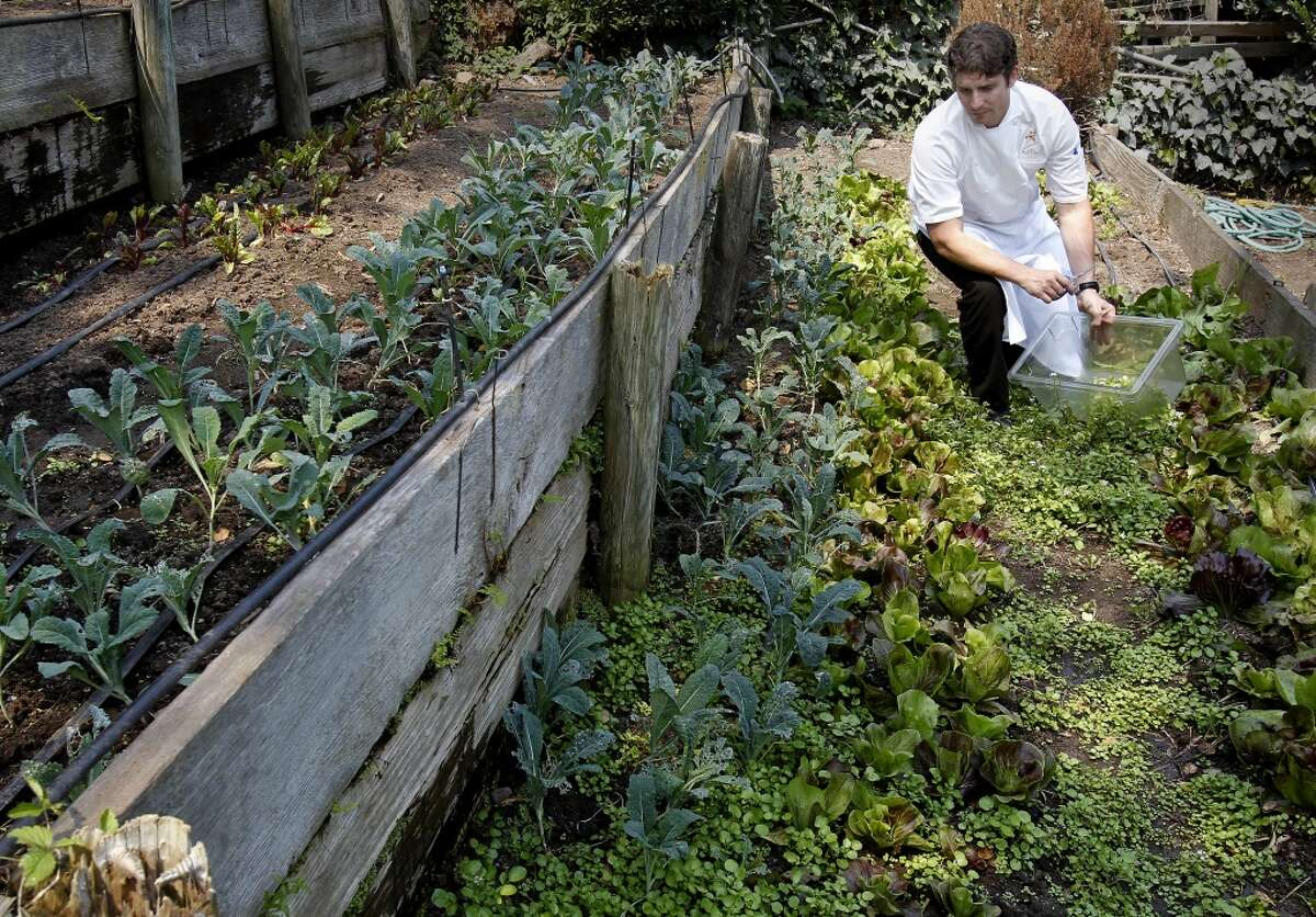 Chef Ben Balesteri surveys his terraced beds of greens. Poggio chef Ben Balesteri works from a restaurant garden located on a hillside above the popular Sausalito restaurant.