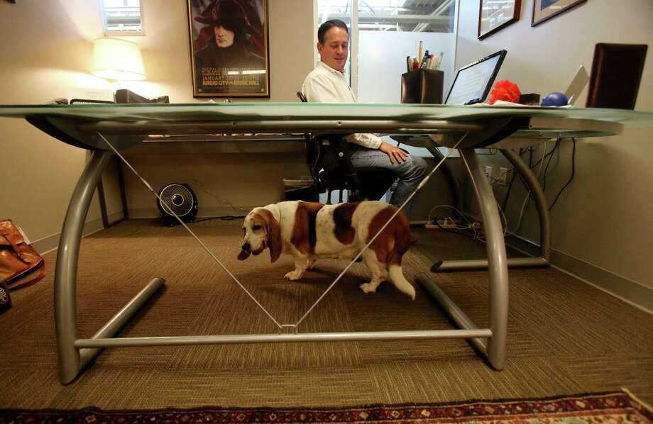 Josephine sits under Jonathan Gurwitz's desk on Friay Aug. 23, 2013.  Members of the KGB Texas staff bring their dogs to work on Fridays. Photo: Helen L. Montoya, San Antonio Express-News / ©2013 San Antonio Express-News