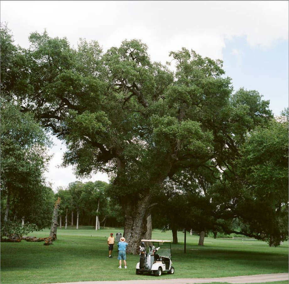 "Historians believe this is where Stephen F. Austin and Texian troops camped as they moved toward San Antonio from Gonzales. The huge oak is in Ralph Yznaga's book, ""Living Witness: Historic Trees of Texas."" Photo: File / San Antonio Express-News"