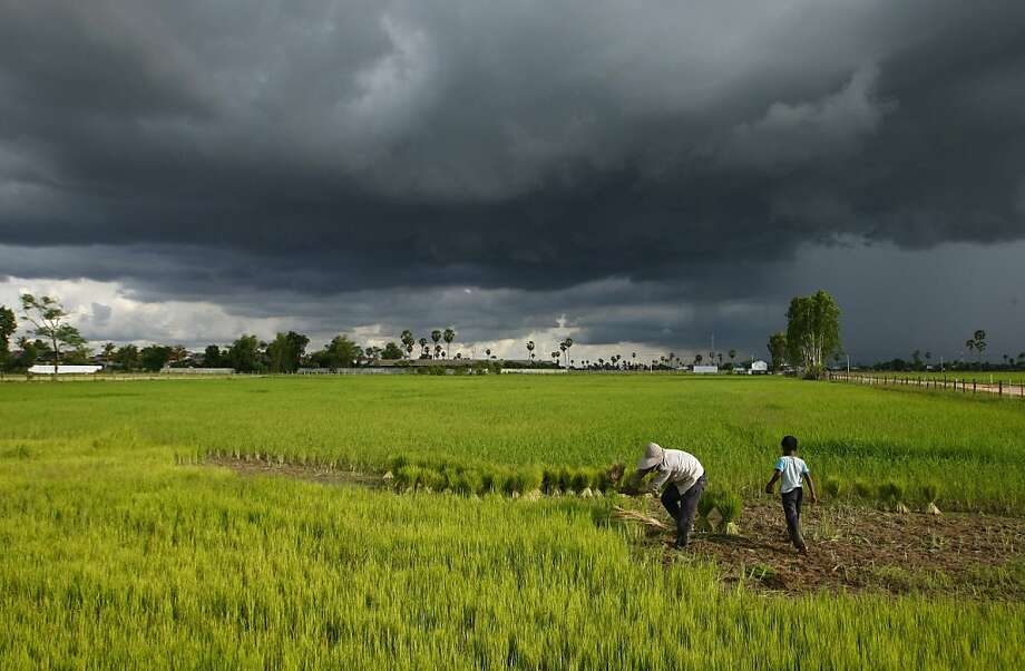 As monsoon clouds gather overhead, a Cambodian farmer and a boy work their rice paddy at Prey Mou outside 